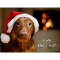 Poster Noël toutou A3